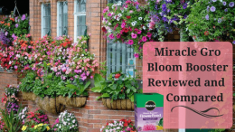 Miracle Gro Bloom Booster Reviewed and Compared