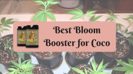 Best Bloom Booster for Coco