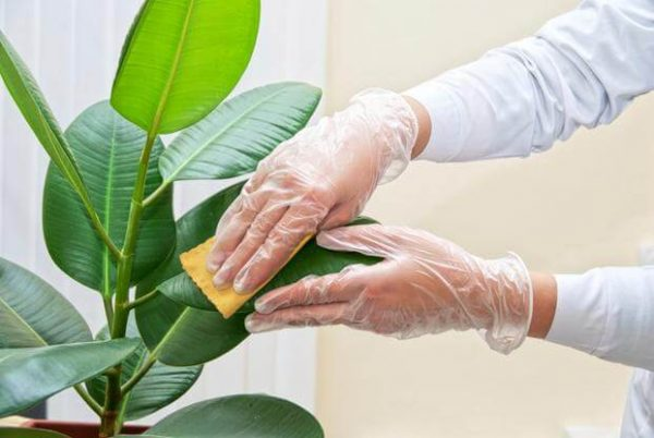 Clean your plants and garden