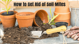 How to Get Rid of Soil Mites- Facts You Need to Know