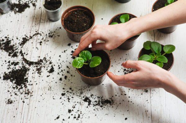 soil replace