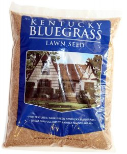 Mountain View Seed Kentucky Bluegrass