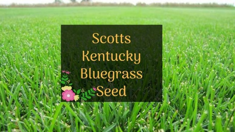 Scotts Kentucky Bluegrass Seed