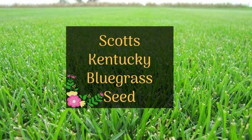 Scotts Kentucky Bluegrass Seed