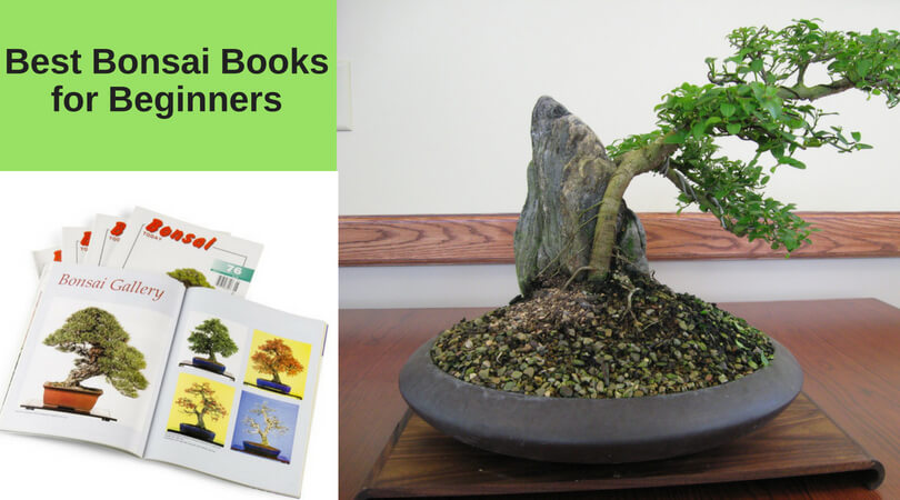 Best Bonsai Books for Beginners