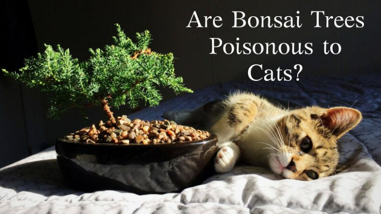 Are Bonsai Trees Poisonous to Cats