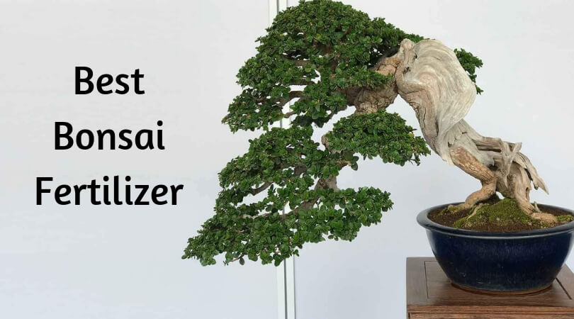 Best Bonsai Fertilizer
