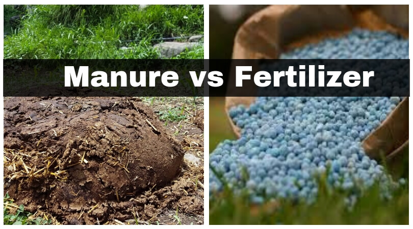 Manure vs Fertilizer