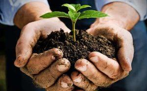 Plant Manure