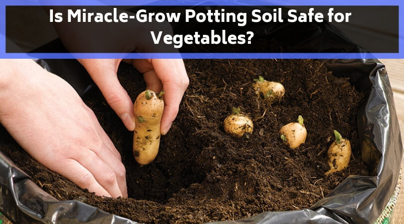 Is Miracle-Grow potting soil safe for vegetables_
