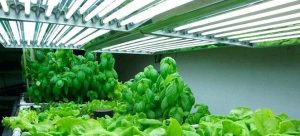 What Type of Fluorescent Lights to Grow Plants?