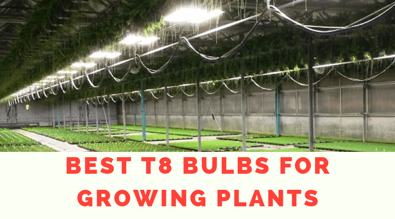 Best T8 Bulbs for Growing Plants