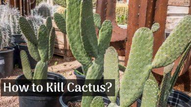 How to Kill Cactus