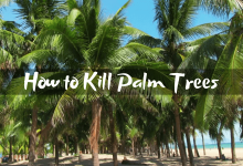 How to Kill Palm Trees