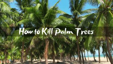 How to Kill Palm Trees