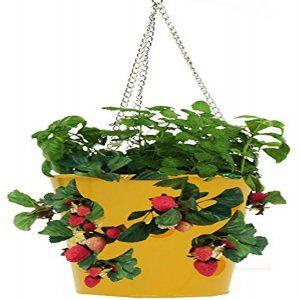Hit's hanging strawberry planter