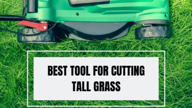 Best Tool for Cutting Tall Grass