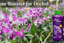 Bloom Booster for Orchid