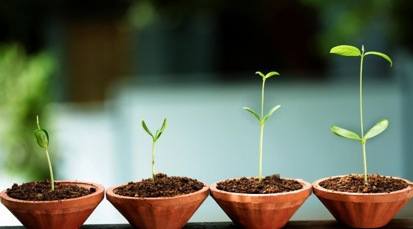 16 essential elements required by the plant for growth