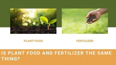 fertilizer vs plant food