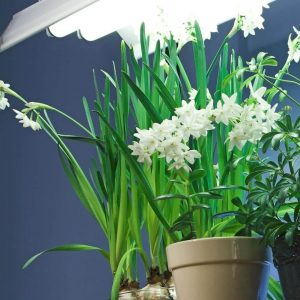 What is the ideal amount of light for plants