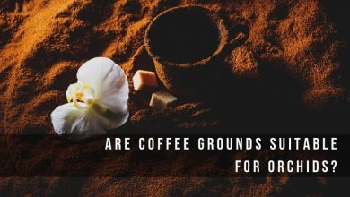 Are Coffee grounds suitable for orchids