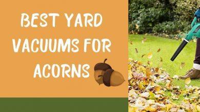 Best Yard Vacuums For Acorns