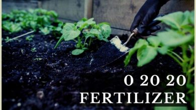 0 20 20 Fertilizer