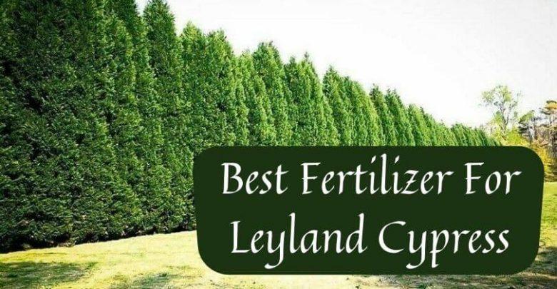 Best fertilizer for Leyland cypress