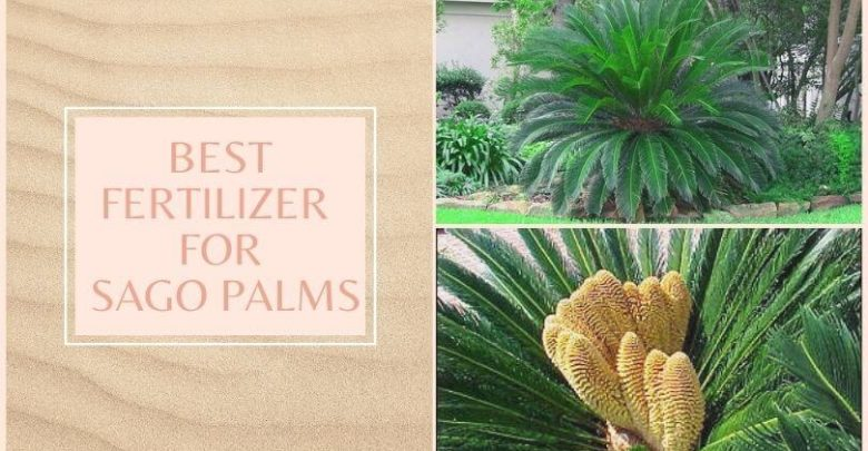 Best Fertilizer for Sago Palms