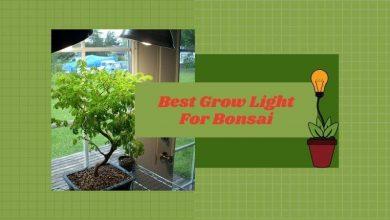 Best Grow Light For Bonsai
