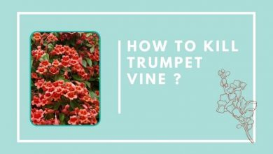 How To Kill Trumpet Vine