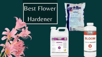 Best Flower Hardener